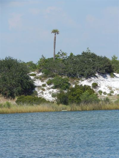 Orange Beach Residential Lots & Land For Sale: Ono Blvd