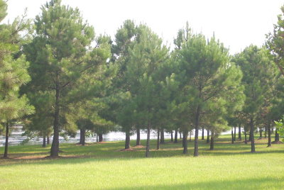 Andalusia AL Residential Lots & Land For Sale: $35,000