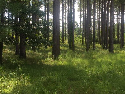 Gantt AL Residential Lots & Land For Sale: $18,000