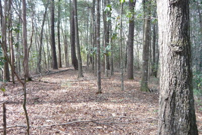 Andalusia Residential Lots & Land For Sale: 30 Ac Straughn School Rd (County Road 43)