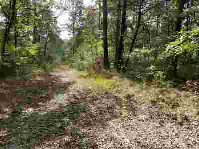 Mentone Residential Lots & Land For Sale: 3593 Alabama Highway 117