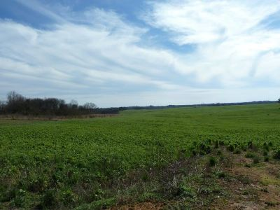 Athens Residential Lots & Land For Sale: Cox Road