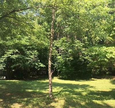 Huntsville Residential Lots & Land For Sale: 204 South Plymouth Road