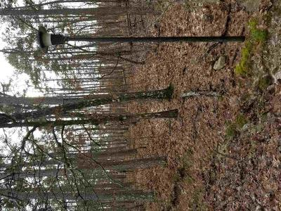 Garland County Residential Lots & Land For Sale: 24,25,26 Mansilla Way