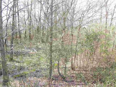 Cabot Residential Lots & Land New Listing: Lot 41 Saddle Brook Circle