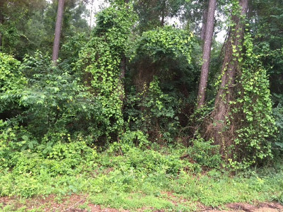 Residential Lots & Land For Sale: Hwy 19S