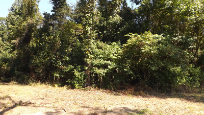Residential Lots & Land For Sale: 148 Holly Grove Road