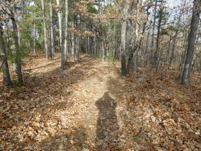 Jasper Residential Lots & Land For Sale: Nc 6401 Road