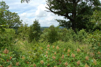 Lead Hill, Diamond City Residential Lots & Land For Sale: Eagle View
