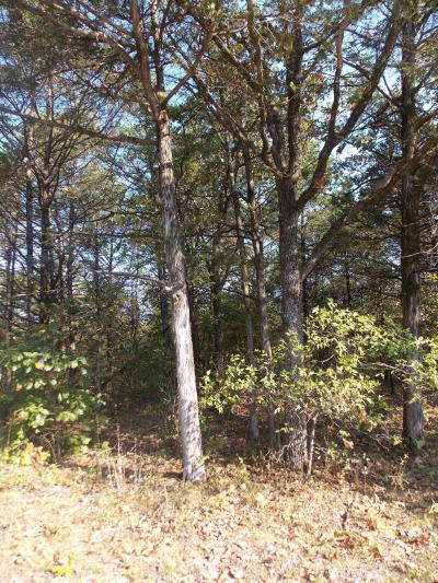 Lead Hill, Diamond City Residential Lots & Land For Sale: Pine Street