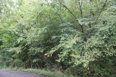 Harrison Residential Lots & Land For Sale: Cody Court