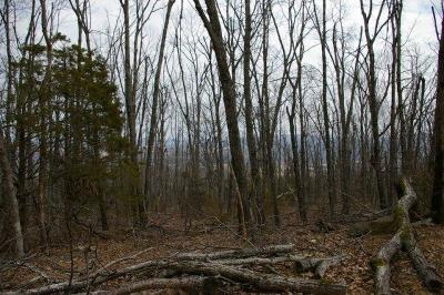 Searcy County Residential Lots & Land For Sale: Off Richland Road
