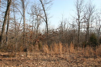 Boone County Residential Lots & Land For Sale: Lot 13 E Persimmon Point Road