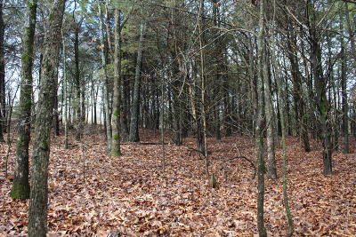 Marion County Residential Lots & Land For Sale: Lot 3 Pine Valley Dr