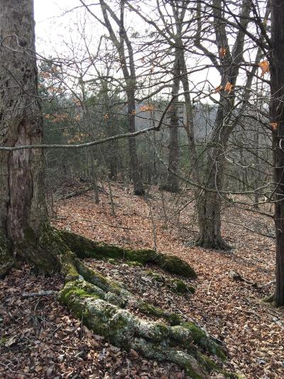 Residential Lots & Land For Sale: Locust Road