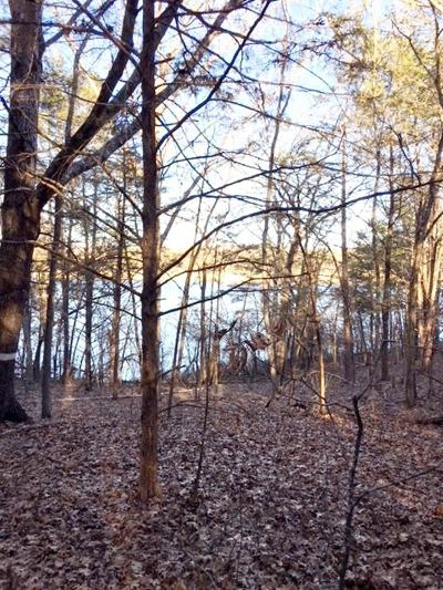 Residential Lots & Land For Sale: N Horseshoe Bend Road