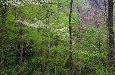 Hot Springs AR Residential Lots & Land For Sale: $57,900