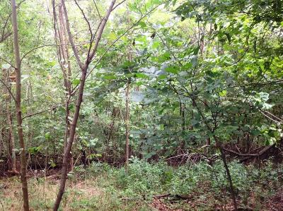 Residential Lots & Land For Sale: Tract A War Eagle Blacktop RD