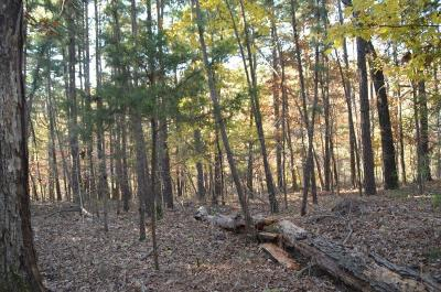 Rogers Residential Lots & Land For Sale: 6.16AC Huckleberry LN