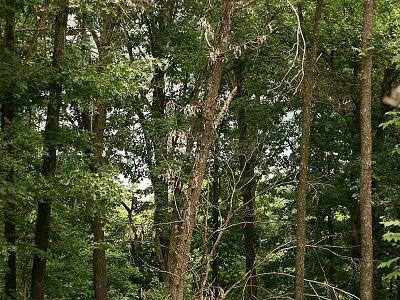 Eureka Springs, Rogers, Lowell Residential Lots & Land For Sale: East Bluff Rd