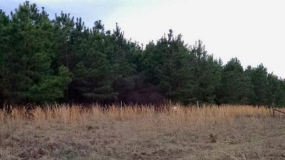 Residential Lots & Land For Sale: Tbd County Road 2460