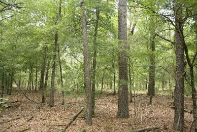 Dekalb Residential Lots & Land For Sale: County Road 3204