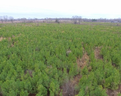 Residential Lots & Land For Sale: 72 +/- Acres County Road 4103