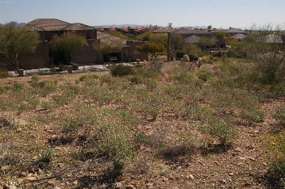 Gold Canyon Residential Lots & Land For Sale: 5267 S Gold Canyon Drive