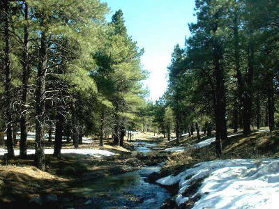 Coconino County, Yavapai County Residential Lots & Land For Sale: S Perkinsville Rd. Road
