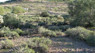 Superstition Mountain, Superstition Mountain Golf And Country Club, Superstition Mountain Golf & Country Club Residential Lots & Land For Sale: 9352 E Superstition Mountain Drive