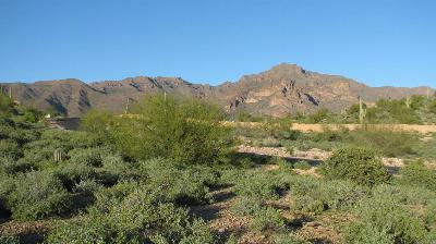 Superstition Mountain, Superstition Mountain Golf And Country Club, Superstition Mountain Golf & Country Club Residential Lots & Land For Sale: 3272 S Petroglyph Trail