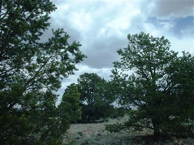Coconino County Residential Lots & Land For Sale: 5294 N Indian Meadows Road