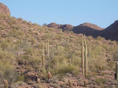 Queen Creek AZ Residential Lots & Land For Sale: $94,900