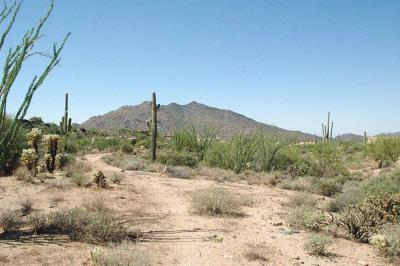 Carefree Residential Lots & Land For Sale: N Ocotillo Ridge Drive