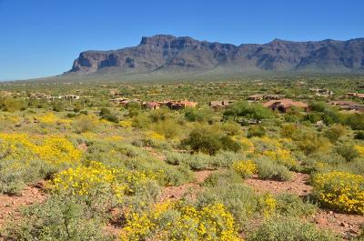 Gold Canyon AZ Residential Lots & Land For Sale: $349,000