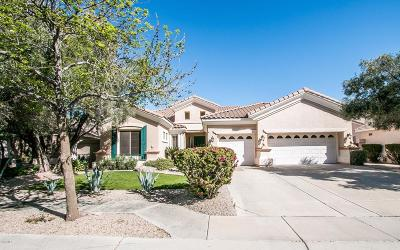 Tempe Single Family Home For Sale: 404 W Secretariat Drive