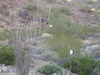 Paradise Valley Residential Lots & Land For Sale: 6900 N 39th Place