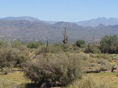 Rio Verde Residential Lots & Land For Sale: 16800 E Dixileta Drive