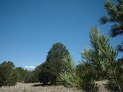 Coconino County, Yavapai County Residential Lots & Land For Sale: 1539 W Wolf Lane