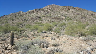 Queen Creek Residential Lots & Land For Sale: N Chuckwalla Trail