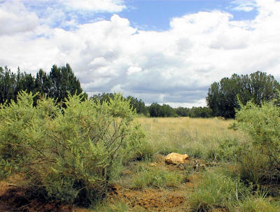 Overgaard Residential Lots & Land For Sale: 1372 Terrace Drive