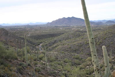 Scottsdale Residential Lots & Land For Sale: 40802 N Brangus Road