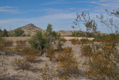 Goodyear Residential Lots & Land For Sale: 9083 S Krista Drive