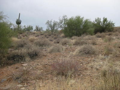 Fountain Hills Residential Lots & Land For Sale: 10228 N Fire Canyon