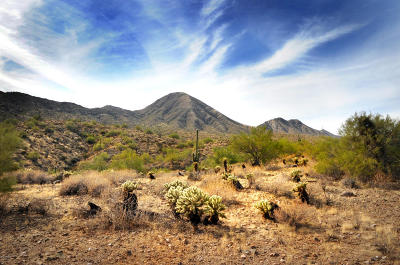 Fountain Hills Residential Lots & Land For Sale: 16124 N Desert Fox Parkway