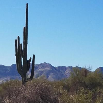 Scottsdale Residential Lots & Land For Sale: 138xx E Windstone Trail