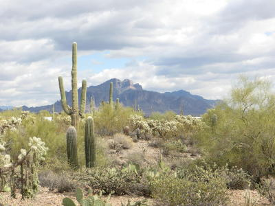 Apache Junction Residential Lots & Land For Sale: Delaware Road