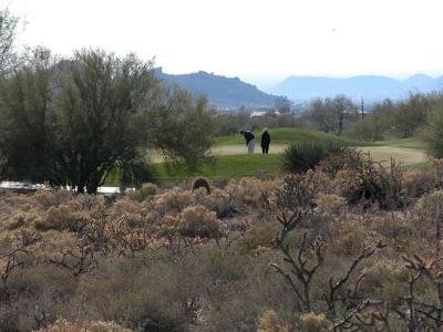 Scottsdale Residential Lots & Land For Sale: 10354 E Celestial Drive