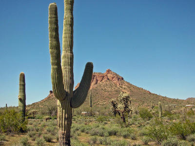 Queen Creek AZ Residential Lots & Land For Sale: $87,000