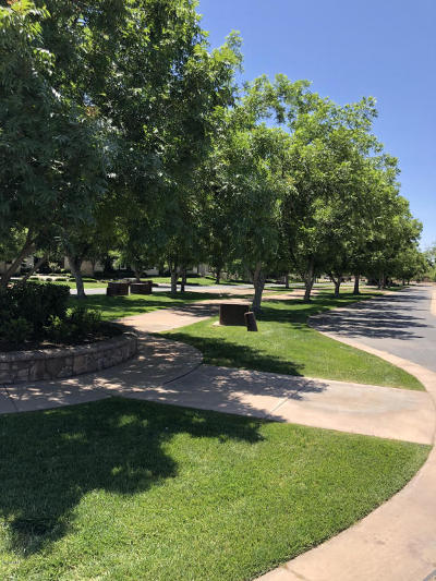 Queen Creek Residential Lots & Land For Sale: 20585 E Pecan Lane